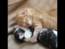 Try Not to Laugh - Cute Kittens