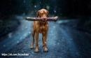 Как научить собаку команде Дай?