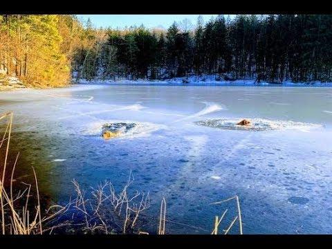 В ледяном озере тонули двое псов...Они могли бы погибнуть если бы не он и его верный друг...