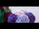 Flowers Fair. Гортензии