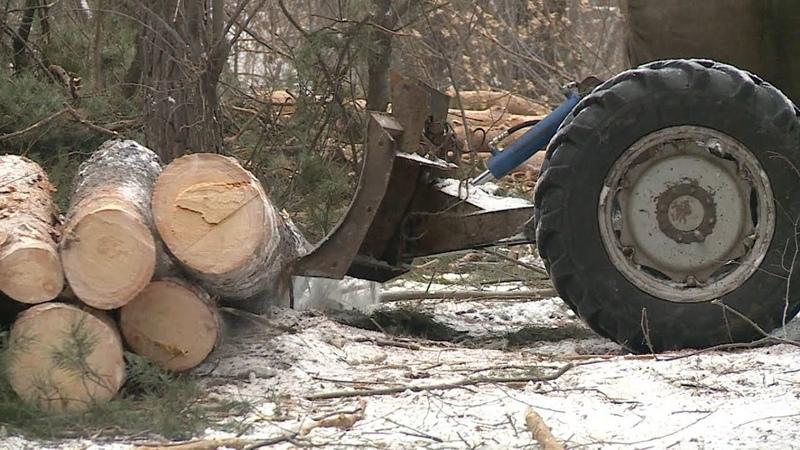 Вырубка леса на ул Герцена в Бийске обеспокоила горожан Будни 12 12 18г Бийское телевидение