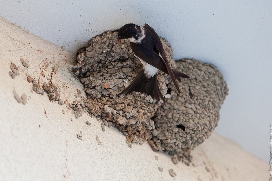 Ласточки гнездо