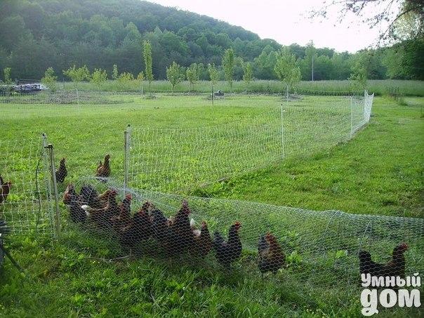 Куриный побег 😊 Умный дом — мастерская чудес!