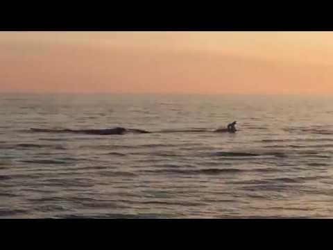 Игры Дельфинов в Анапе (Джемете) на закате 9 апреля 2019