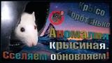 (О) АНОМАЛЬНАЯ крыса! Обновление стай и очередное сселение. Стерильные! (Fancy Rats)