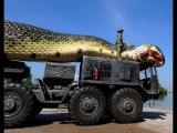 Cobra gigante encontrada no Mar Vermelho