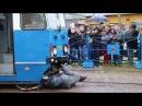 MPK Kraków Symulacja zderzenia tramwaju z rowerzystą 15 05 2014