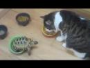 Черепаха и коты