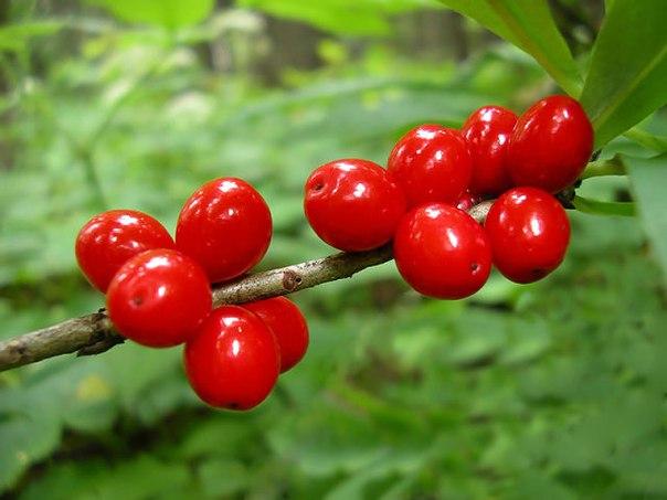 Всего три полезных правила помогут получить богатый урожай ягод