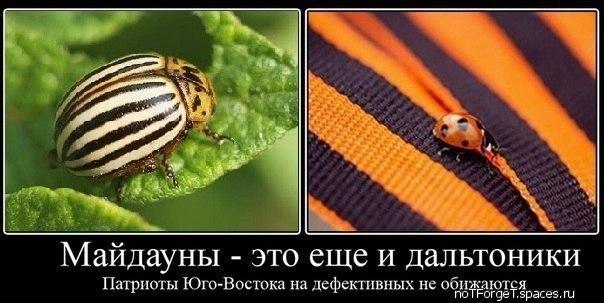 http://cs14111.vk.me/c7005/v7005815/1241d/Y_swTZpQ12g.jpg