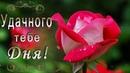 🎶💗 УДАЧНОГО ДНЯ ХОРОШЕГО НАСТРОЕНИЯ ЭТИ ПРЕКРАСНЫЕ РОЗЫ ДЛЯ ТЕБЯ 🎶💗 4К