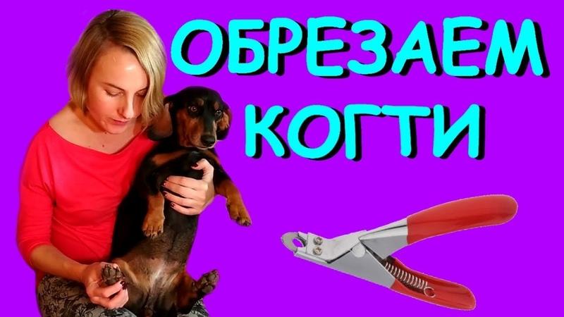 Обрезаем когти собаке Как подстричь когти собаке в домашних условиях