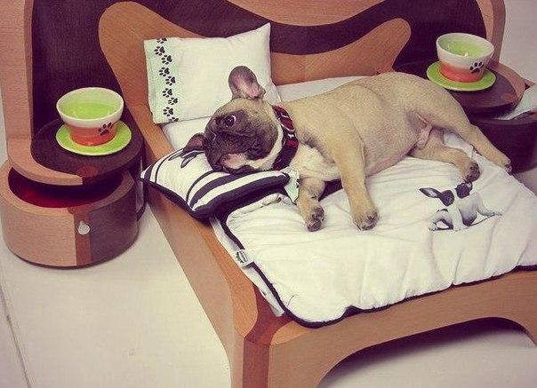 Кровать для собаки своими руками фото