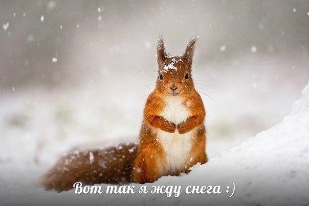 Скоро Новый Год!!! :)))))))))