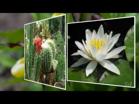 *** -Wonderful Botanical Garden and music by Eugen Doga - ***