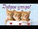 Милое пожелание Доброго Утра! С Добрым Утром! Котики!