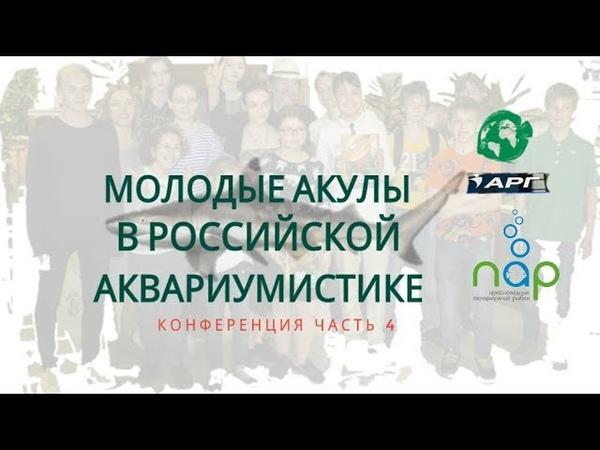 Молодые акулы в РОССИЙСКОЙ аквариумистике