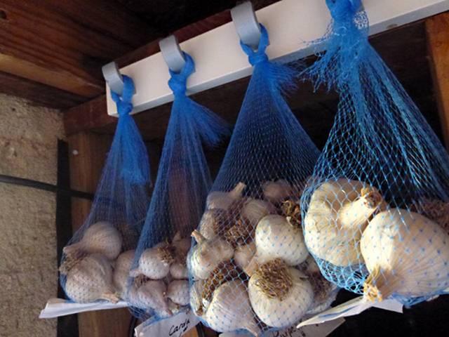 Чеснок-правила выращивания и хранения урожая