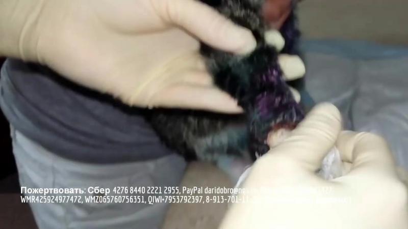 Дети спасают котика с отрезанными лапами _ волонтеры помогают животным _ save th