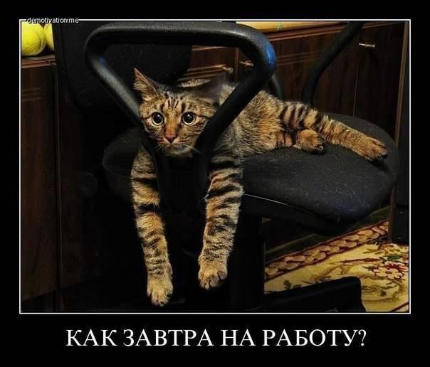 http://cs320323.vk.me/v320323667/69b1/7kwTywX0kc8.jpg