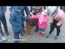 Собаководы Бийска устроили праздник детям, оставшимся без родителей (Бийское телевидение)