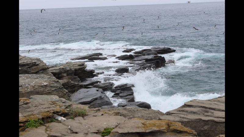 MVI Тихий океан шумит!