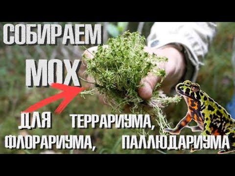 Как собирать мох для террариума или флорариума