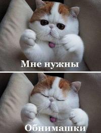 смешные картинки и милые