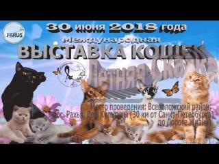 выставка кошек 30 июня 2018