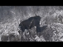 охота на лося анонс