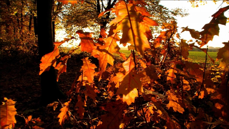 Дикая природа Германии. Тюрингинский лес. 2011