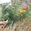 Помощь птицам. Спасение диких животных
