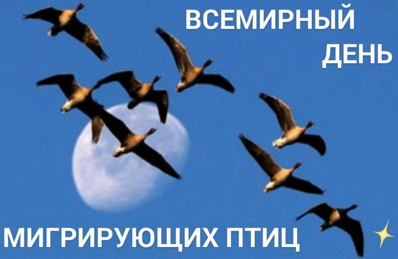 https://pp.userapi.com/c846216/v846216322/4df5c/JvSzsZqyqYc.jpg