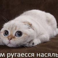 Настя Гуревич, 1 марта , Москва, id225265347