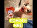 Вот что с этим котиком сделала любовь!