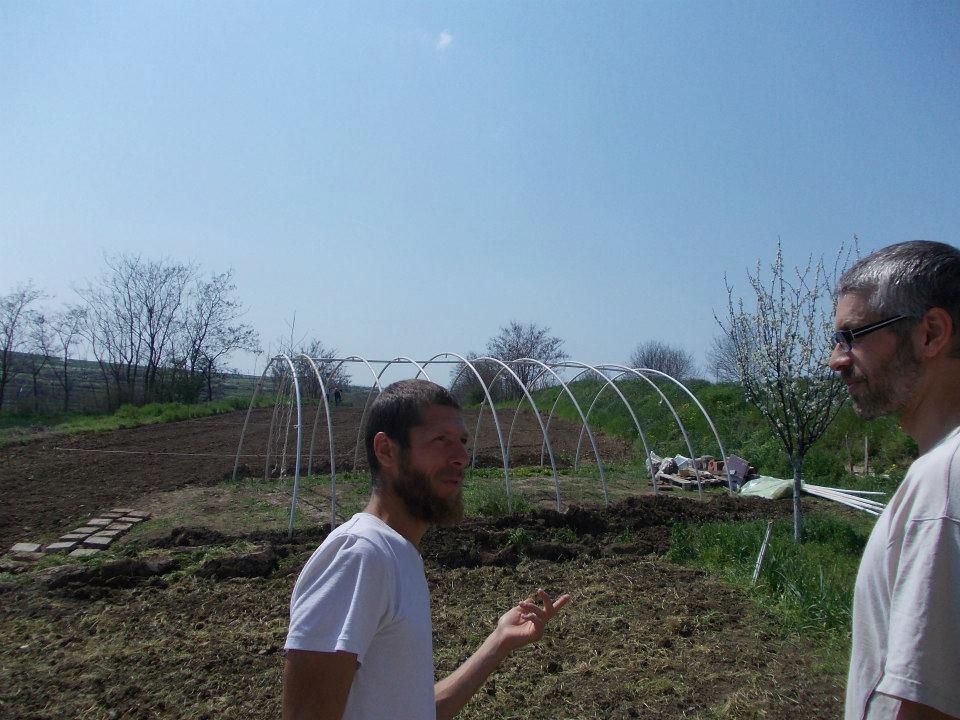 Волонтёрство в Сербии