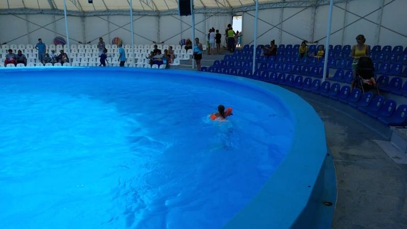 Катание на дельфине... г. ФеодосиядельфинарийНЕМО