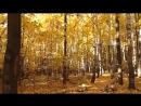 Золотая осень в Измайловском парке часть 2