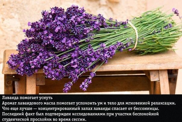 9 природных ароматов, неожиданно меняющие эмоции человека
