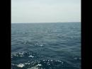 черное море. дельфины