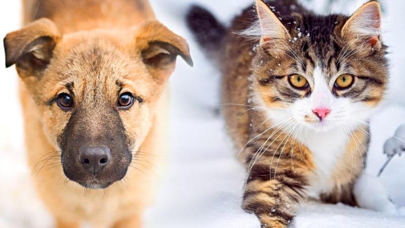 Кошка повела замёрзшего щенка за собой на оживлённую тропинку, ведущую к людям и теплу...
