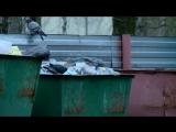 Что будет с мусором в Поморье?