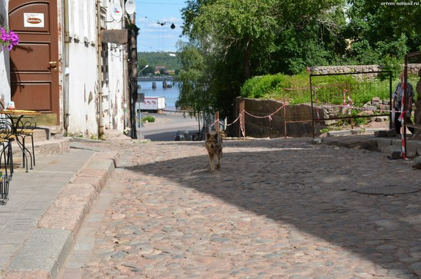 А по улицам волки гуляют