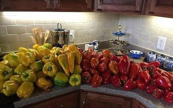 Советы бывалых огородников по выращиванию перца