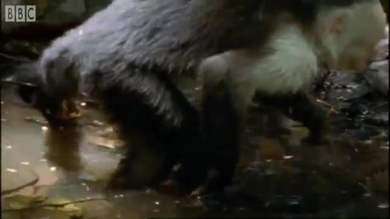 Обман у животных