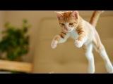 Epic Funny Cats Jump Fail 2014-2013