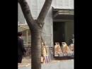 [FANCAM] 180319 | Wanna One после пресс-конференции по случаю камбэка - 1=1 (I PROMISE YOU)