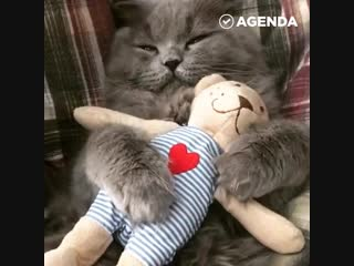 Котик и игрушка