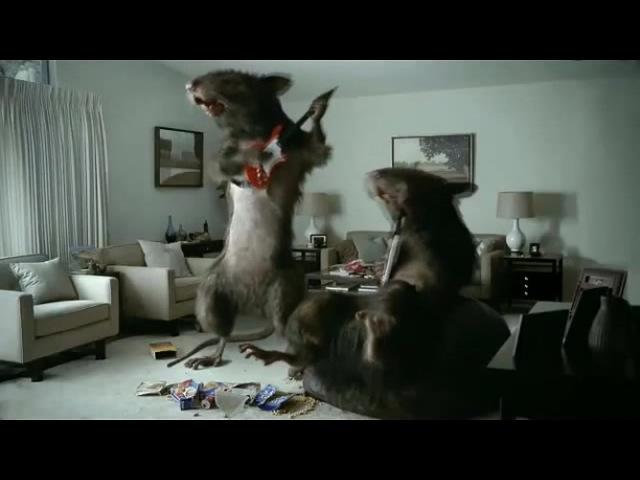 Крысы металхеды (6 sec)