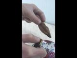 #горящий шоколад от Роэль